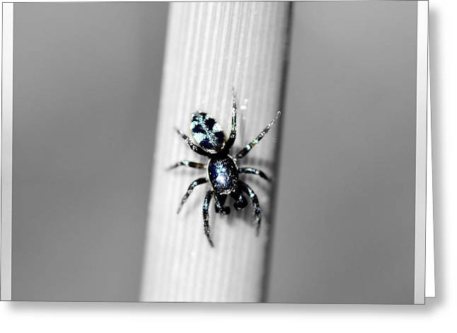 Black Spider In Black And White Greeting Card by Toppart Sweden