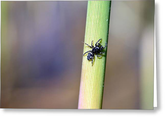 Metallica Greeting Cards - Black Spider in reeds Greeting Card by Toppart Sweden