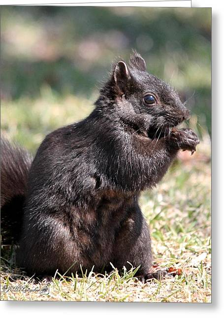 Sciurus Carolinensis Greeting Cards - Black Squirrel Greeting Card by J McCombie