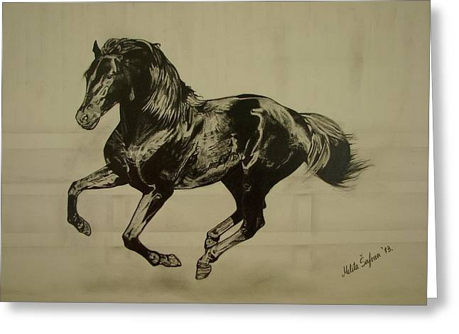 Cob Drawings Greeting Cards - Black stallion Greeting Card by Melita Safran