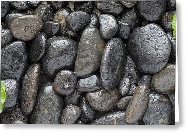 Black Greeting Cards - Black Stones And Ginko Leaves Panorama Greeting Card by Steve Gadomski