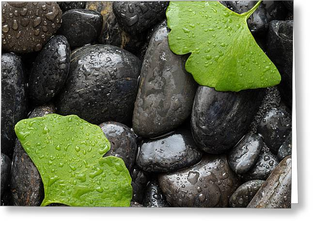 Stones Photographs Greeting Cards - Black Stones And Ginko Leaves Square Greeting Card by Steve Gadomski