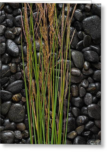 Black Greeting Cards - Black Stones And Grasses Greeting Card by Steve Gadomski