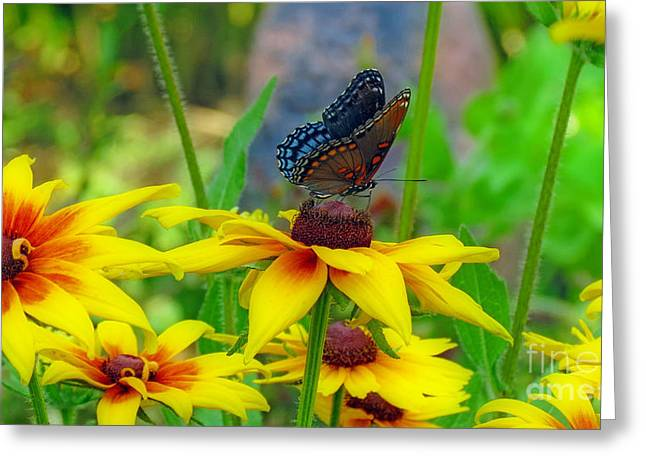 Purchase Greeting Cards - Black Swallowtail Butterfly With Gloriosa Daisies Greeting Card by Kay Novy