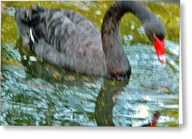 Natur Kunst Bilder Greeting Cards - Black Swan Greeting Card by Gunter  Hortz
