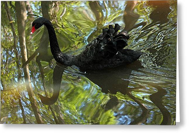 Waterscape Digital Art Greeting Cards - Black Swan Series V  Greeting Card by Suzanne Gaff