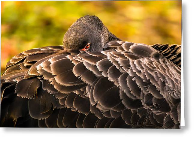 Black Swan Greeting Card by Yuri Fineart