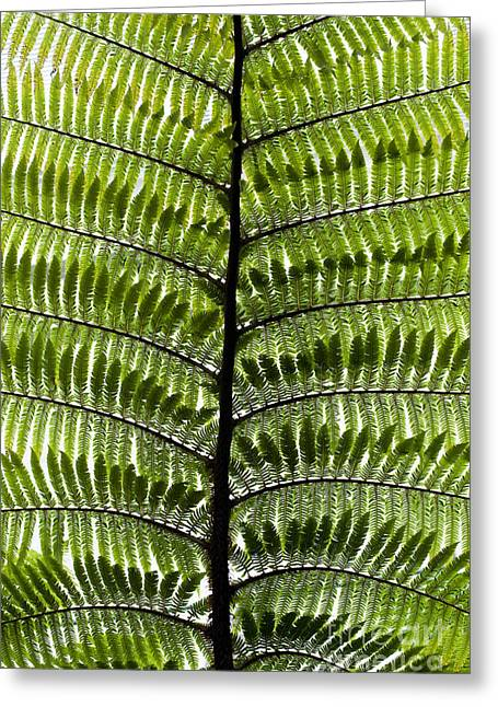Frond Greeting Cards - Black Tree Fern Frond Greeting Card by Tim Gainey