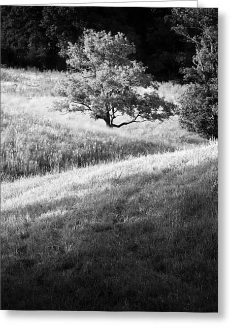 Black Walnut Tree Greeting Card by Nathaniel Kidd