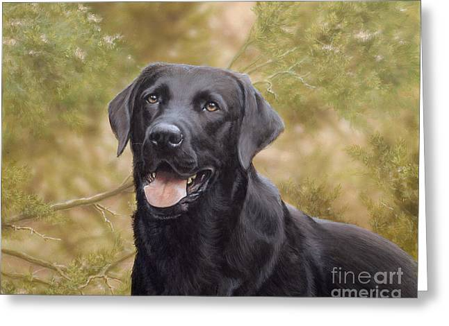Collie Greeting Cards - Black Watch Greeting Card by John Silver