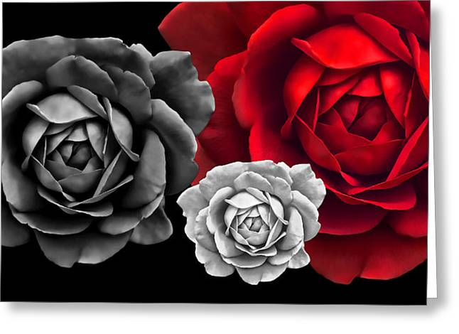 Rose Portrait Greeting Cards - Black White Red Roses Abstract Greeting Card by Jennie Marie Schell