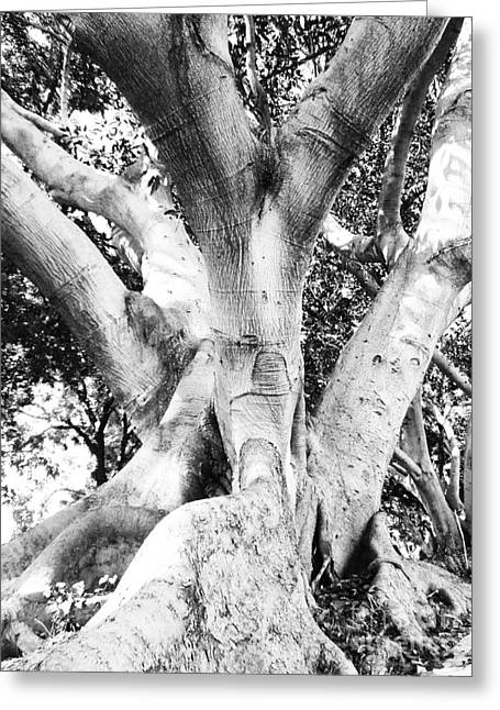 Friendly Pyrography Greeting Cards - Black white tree Large Trunk Nature Sculpture Fall Fine Art Photography Deco Greeting Card by Marie Christine Belkadi