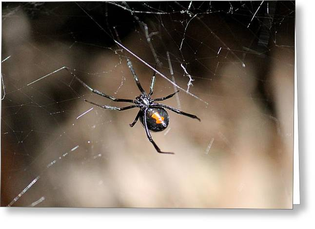 Black Widow Greeting Cards - Black Widow Greeting Card by Mary Susan Cannon
