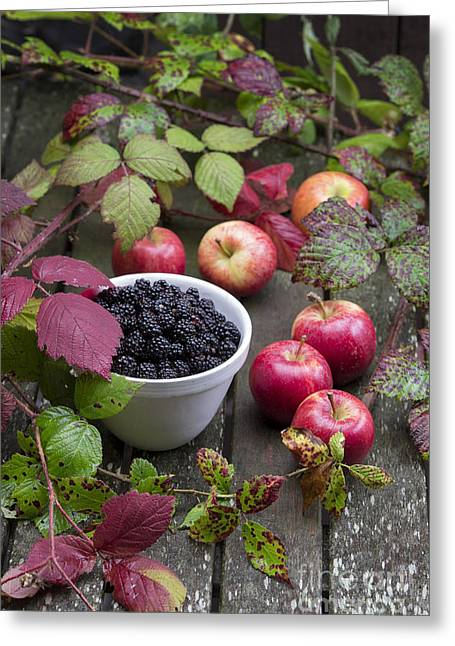 Foraging Greeting Cards - Blackberry and Apple Greeting Card by Tim Gainey