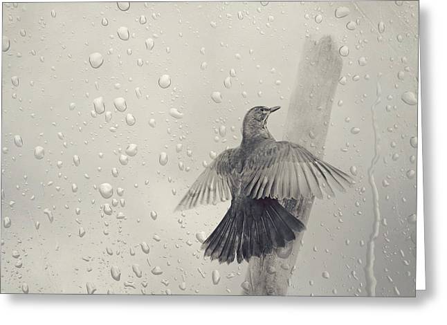 Winter Photos Mixed Media Greeting Cards - Blackbird in the rain Greeting Card by Heike Hultsch