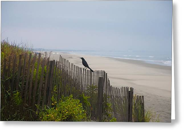 On The Beach Digital Greeting Cards - Blackbird on a Fence on the Beach Greeting Card by Bill Cannon