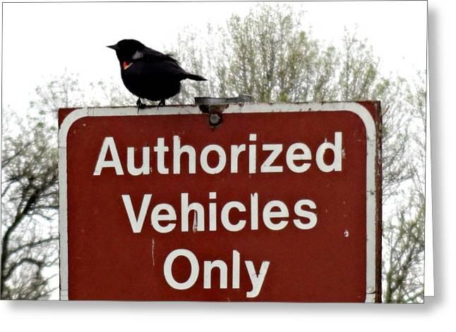 Bottomlands Greeting Cards - Blackbird On Patrol Greeting Card by Lizbeth Bostrom