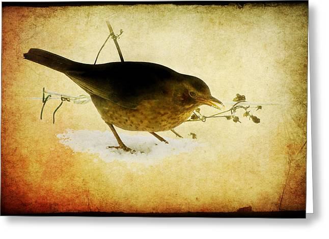 Natuur Greeting Cards - Blackbird under the feeding table Greeting Card by Steppeland -