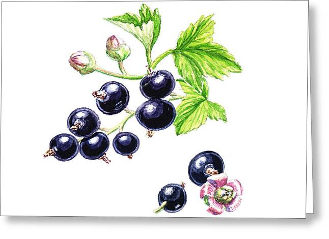 Purchase Greeting Cards - Blackcurrant Botanical Design Greeting Card by Irina Sztukowski