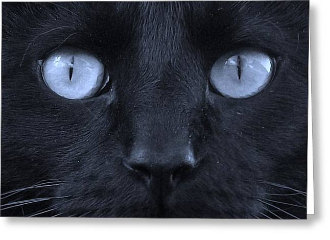 Marble Eye Greeting Cards - Blackie blue Greeting Card by Elizabeth Sullivan