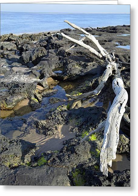 Bruce Photos Greeting Cards - Blackrock Beach Driftwood Florida Greeting Card by Bruce Gourley