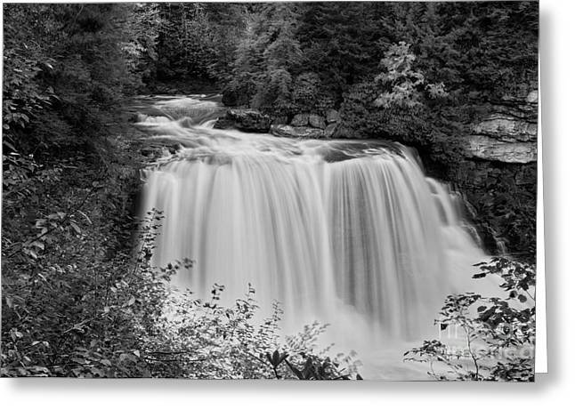 River Greeting Cards - Blackwater Falls D300_12414_bw Greeting Card by Kevin Funk