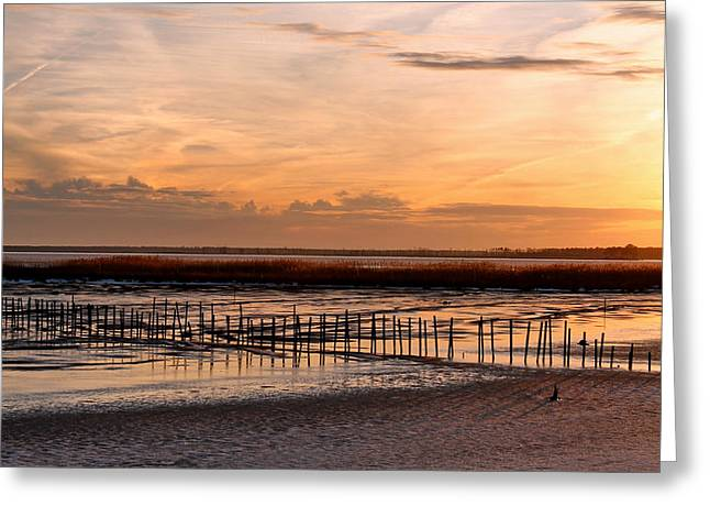 Sunset Greeting Cards Greeting Cards - Blackwater National Wildlife Refuge Sunset 2 Greeting Card by Francie Davis