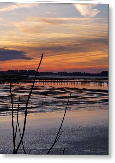 Snowy Evening Greeting Cards - Blackwater National Wildlife Refuge Sunset 5 Greeting Card by Francie Davis