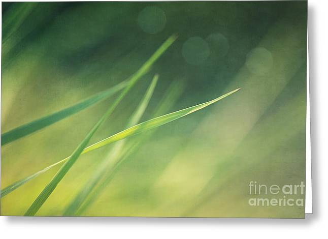 Blades Of Grass Bathing In The Sun Greeting Card by Priska Wettstein
