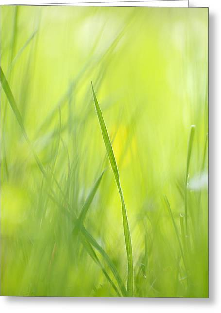 Warm Summer Greeting Cards - Blades of grass - green spring meadow - abstract soft blurred Greeting Card by Matthias Hauser