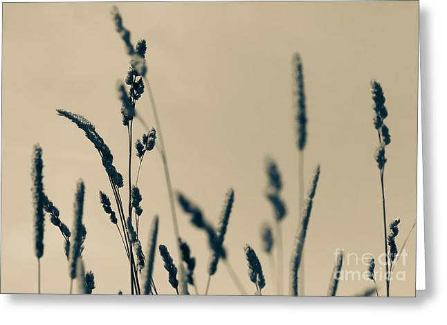 Blade Of Grass Greeting Cards - Blades of Grass Greeting Card by Heidi Piccerelli
