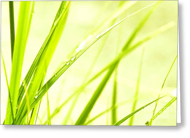 Green Blade Of Grass Greeting Cards - Blades of grass Greeting Card by Jana Behr