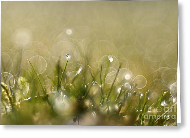 Green Blade Of Grass Greeting Cards - Blades of grasses Greeting Card by Jana Behr
