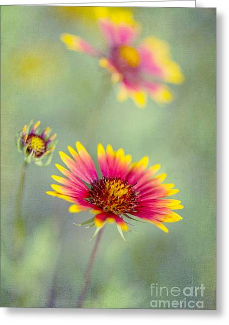 Green Blanket Greeting Cards - Blanket Flowers Greeting Card by Elena Nosyreva
