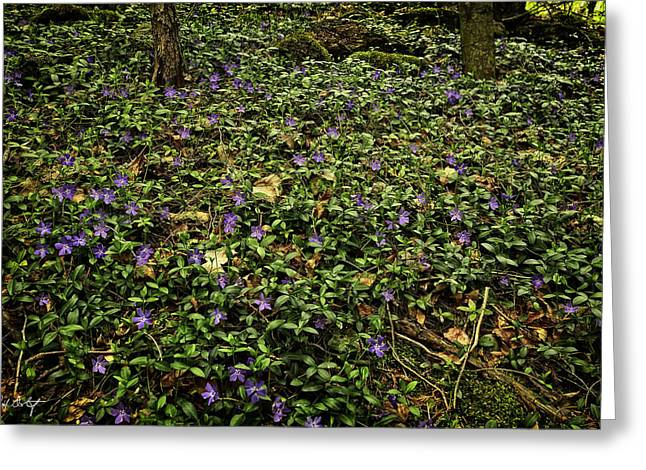Canada Greeting Cards - Blanket of Periwinkle Greeting Card by Phill  Doherty