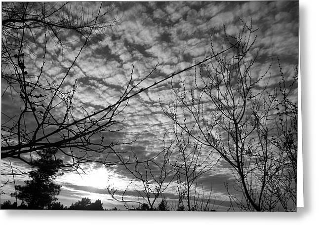 Silhoette Greeting Cards - Blanketing The Sky Greeting Card by Glenn McCarthy Art and Photography