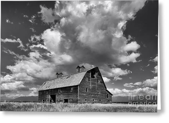 Blasdel Barn - Black And White Greeting Card by Mark Kiver