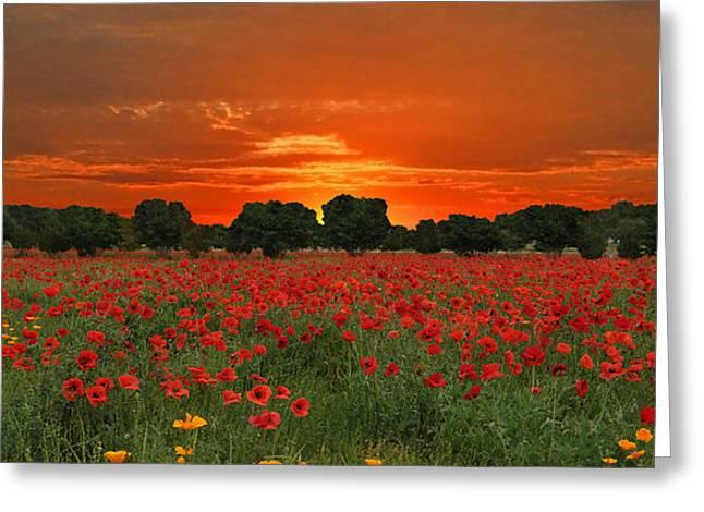 Blaze of Glory Greeting Card by Lynn Bauer