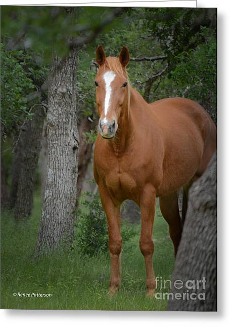The Horse Greeting Cards - Blaze Greeting Card by Renee Patterson