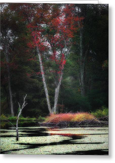 Lilly Pad Greeting Cards - Blazing Beaver Hut Greeting Card by Bill  Wakeley