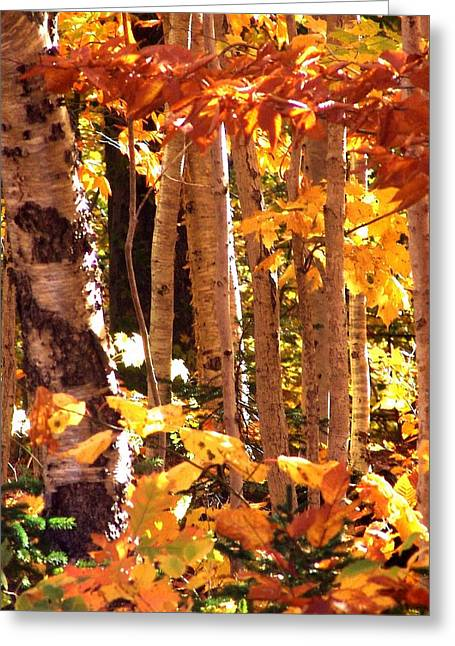 Blazing Birches Greeting Card by George Cousins