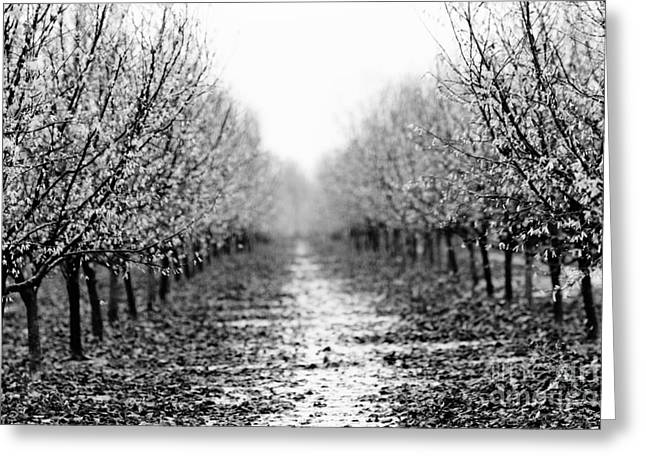 Orchard Greeting Cards - Bleak Orchard 2 Greeting Card by Rebecca Cozart