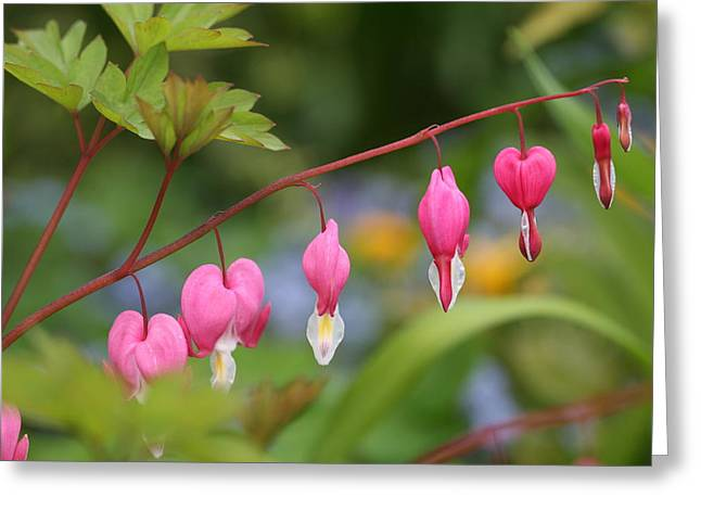 Mark Severn Greeting Cards - Bleeding Heart Greeting Card by Mark Severn