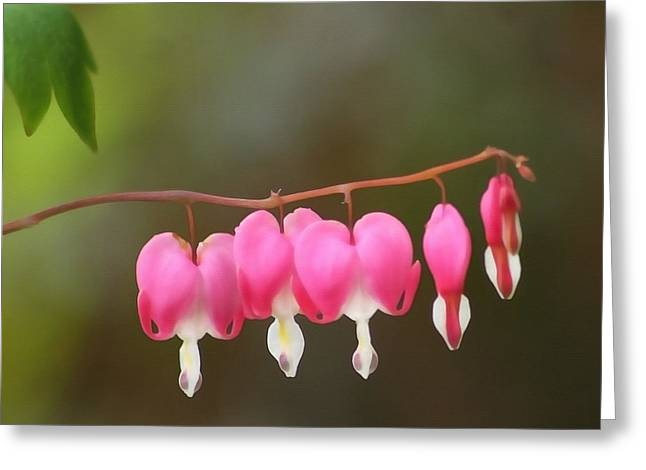 Renewing Greeting Cards - Bleeding Hearts Greeting Card by Art Block Collections