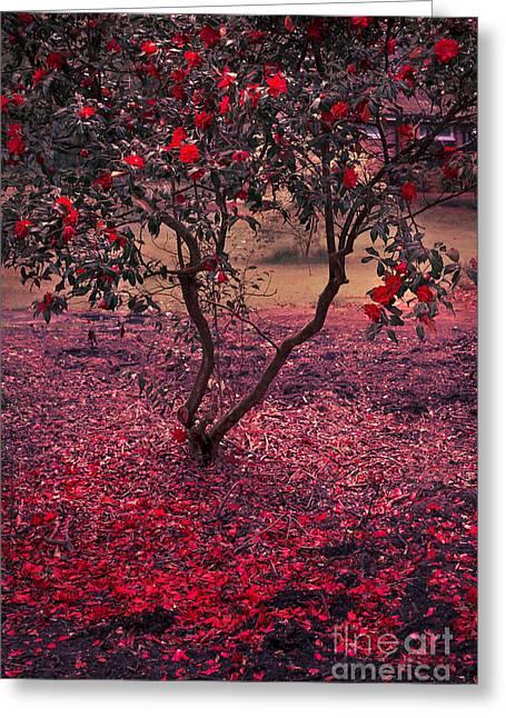 Bleeding Tree Greeting Card by Svetlana Sewell