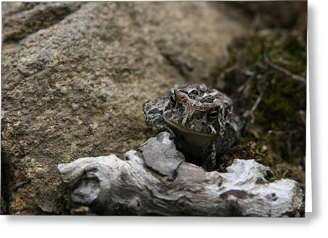 Wildlife Photography Greeting Cards - Fowlers Toad Greeting Card by Neal  Eslinger