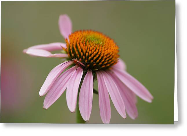 Blending Photographs Greeting Cards - Blending In Greeting Card by Ernie Echols