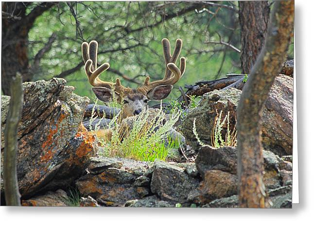 Blending In Greeting Card by Shane Bechler