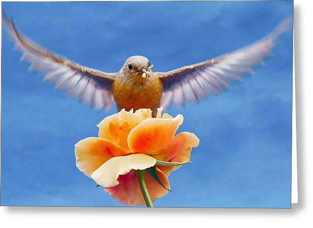 Hovering Greeting Cards - Bless  you Greeting Card by Jean Noren