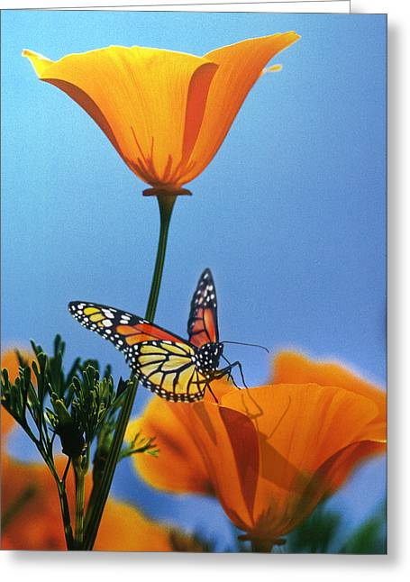 Sun Rays Digital Art Greeting Cards - Blessed by the Sun Greeting Card by Evie Cook